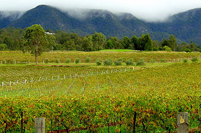 Full Day Hunter Valley Food and Wine Lovers Tour 8:00 AM Thumbnail