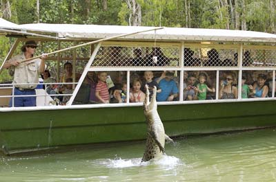 Crocodile Farm Tour with lunch Thumbnail