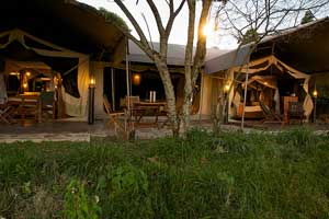 Mara Intrepids Camp Image