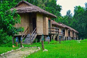 Temple Tiger Green Jungle Resort Image