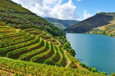 Full Day Douro Valley Wine Tour 8:30 AM Thumbnail