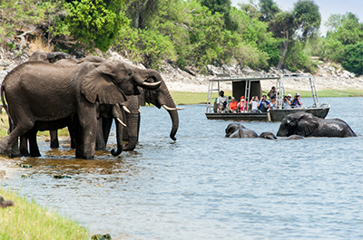 Zambezi River Sundowner Cruise Thumbnail