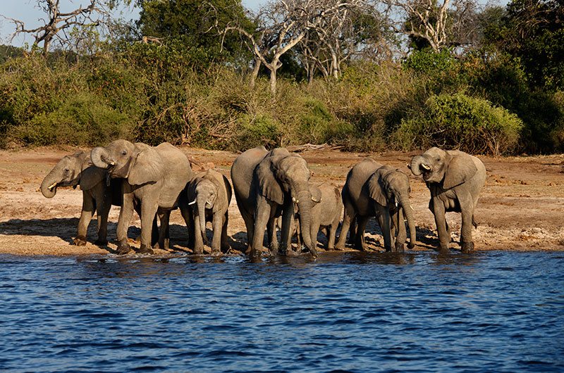 13 Day Deluxe South Africa with Victoria Falls & Chobe River Safari